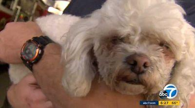 Dog's Life Saved After Firefighter Spends 20 Minutes Giving CPR