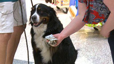 Dog Uses Golf Ball Retrieving Skills To Help Pets In Need
