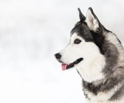 5 Dog Breeds That Welcome Winter