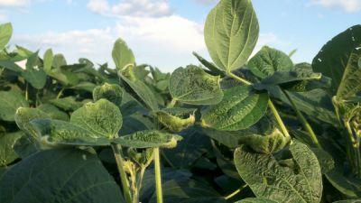 Arkansas Tries To Stop An Epidemic Of Herbicide Damage