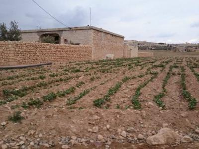The Free Gardens of Kobanî