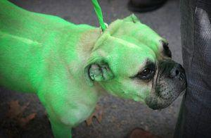 3 Reasons Why Dogs and Cats Wish You'd Leave The Color Of Their Fur Alone