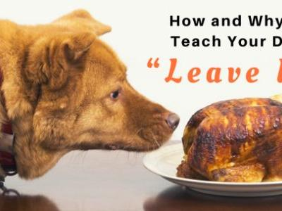 "How and Why to Teach Your Dog ""Leave It"""
