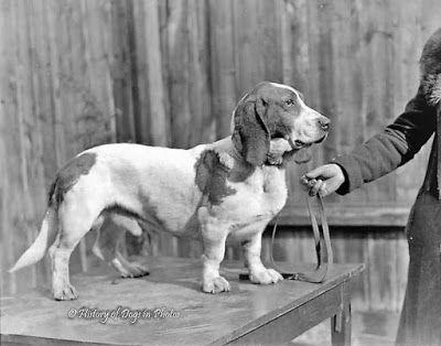 Bassets then and now