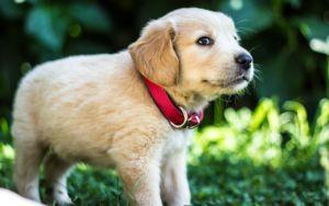 Do Puppies Really Need Special Puppy Food?
