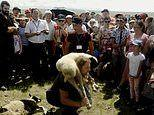 Siberian sheep squatting contest won for the first time in 1,000 years by a foreigner