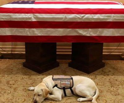 George H.W. Bush's service dog stays by his casket as it travels to D.C