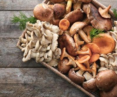Are Mushrooms a Good Source of Plant-Based Protein?