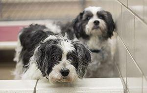 19-year-old litter mates find new home through AHS