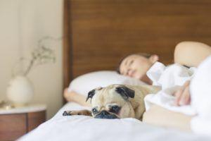 Study Reveals Surprising Find Regarding Women Who Sleep With Dogs