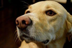 Science Says Your Dog Isn't Exceptionally Smart - Internet Disagrees