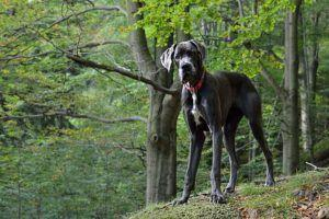 7 Breed Stereotypes That Need To Be Busted