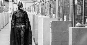 """""""Til Every Cage Is Empty,"""" Batman Saves the Lives of Shelter Pets!"""