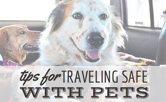 Tips for Safe Traveling With Dogs In the Car