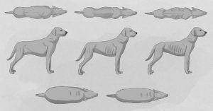 Look Down On Your Dog from Above. If You See This Shape, They Could Die Years Too Young