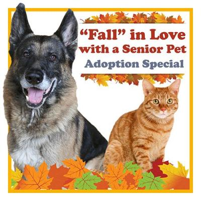 """MCAS"" Oct 20 - 22 Adoption Special"