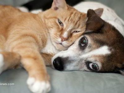 Is YOUR indoor cat or dog consuming parabens? The preservatives are poisoning pets
