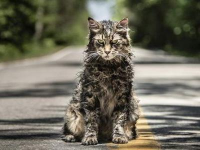 """The Eight Cats Who Played Church in 'Pet Sematary' Were """"A Pack of Divas"""""""