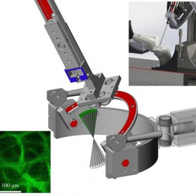Pre-Clinical Translation of Second Harmonic Microscopy of Meniscal and Articular Cartilage Using a Prototype Nonlinear Microendoscope