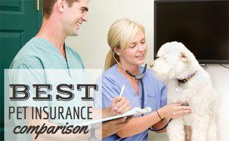 Pet Insurance Comparison 2017: Who's Best?