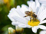 Spanish woman dies from bee sting acupuncture
