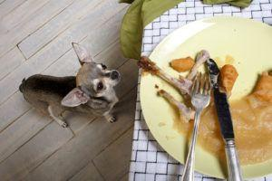 Why Your Pup Should Avoid Potentially Deadly Chicken Bones