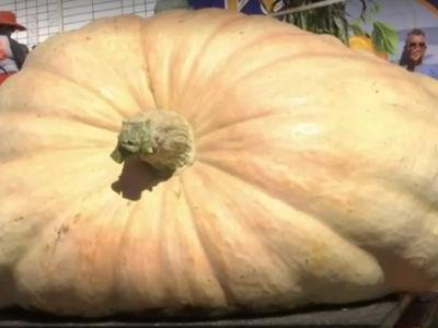 From 'special seed' to 2,170-pound winning pumpkin