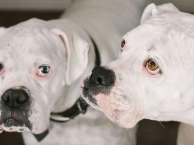 Foster a Dog From Midwest Animal Rescue, Get Free Busch Beer