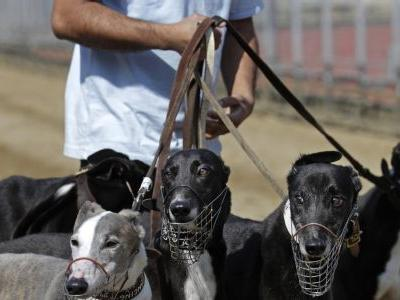 Macau takes in 533 dogs after Asia's only race track shuts
