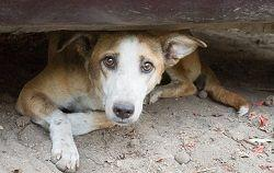 Can I Rescue a Street Dog or Cat While on Vacation and Bring It Home?