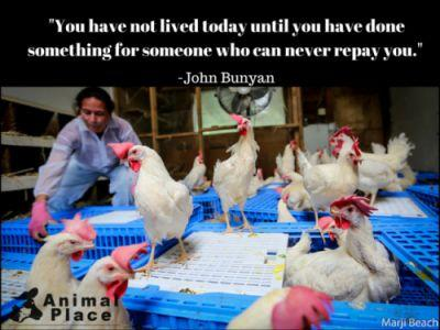 In a few days, we will be rescuing 2,000 hens from battery
