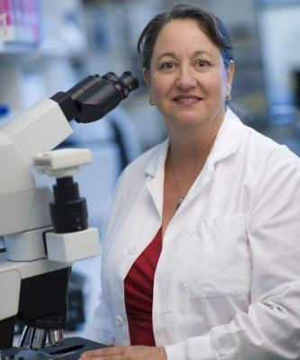 New genetic test classifies lymphomas, impacts diagnosis, therapy