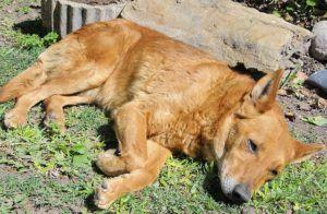What Is A Bone Infection In Dogs?