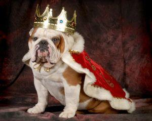 The Pennsylvania Renaissance Faire Features Royal Dog Days
