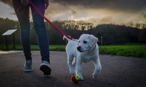 7 Tips For Ensuring A Safe, Enjoyable Walk With Your Dog
