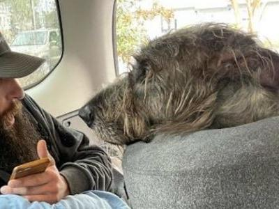Kind Strangers Save 160-Pound Dog After Tragic Hit-And-Run