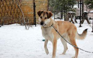New Law Limits Dog Tethering To 30 Minutes In Freezing Temperatures