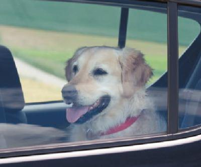 Car Break-ins Are Now Legal to Save the Life of a Dog, Cat or Child
