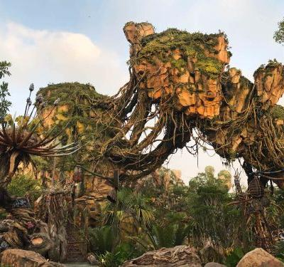 A Disney employee reveals the best part of working at Animal Kingdom - and it has nothing to do with the rides or food