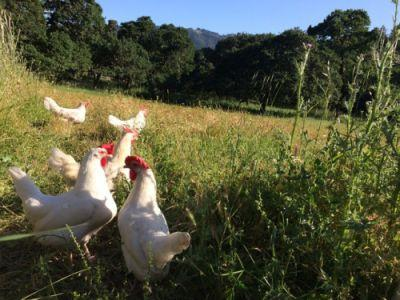 These girls lived confined in battery cages for the first 1.5