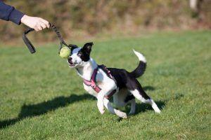 Off-Leash Reliability? Recall? Leash Off Game On!