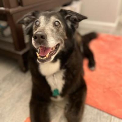 """ISABELLE"" aka ""NELLY"" Happy Adoption Update 12 yrs later"