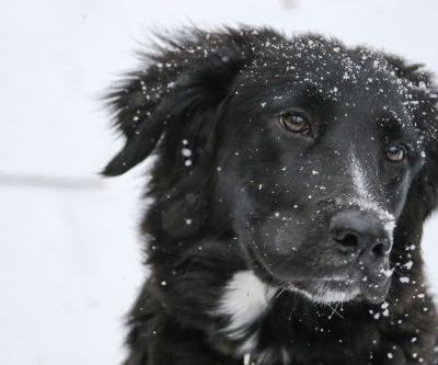 13 ways to keep your pets warm this winter