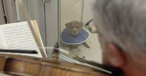 Violinist Volunteers His Talents To Soothe Injured Dogs