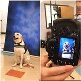 This Service Dog Got His Yearbook Picture Taken, and Yep, That's Definitely a Good Boy