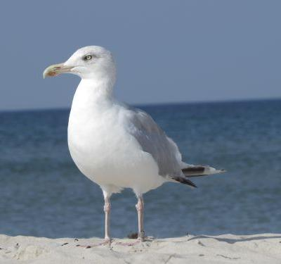 Man fined $124 for kicking seagull that ate cheeseburger