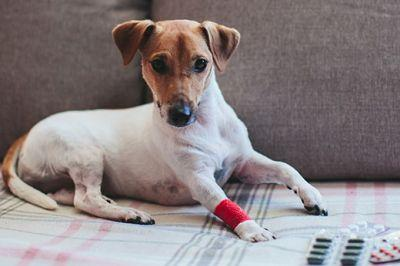 Top Veterinary Articles of the Week: Prescriptions and Pharmacies, Imodium for Dogs?, and more