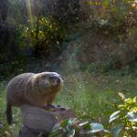 Five Things You Didn't Know about Groundhogs