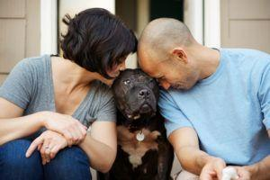 """Photographer's """"Joy Sessions"""" Celebrate Life When Losing A Pet"""