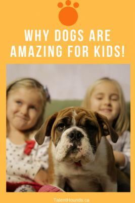 Are Dogs Really Good For Kids?
